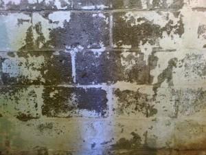 Tintas de baixa qualidade descascam e podem contaminar blocos de concreto com fungos e bactérias