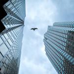 Fachadas envidraçadas induzem aves a voos suicidas