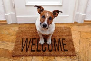 Condomínios pet friendly estão entre as tendências que vão conquistar os consumidores Crédito: Banco de Imagens