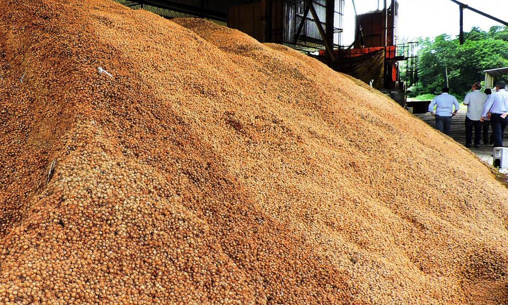 Caroço de açaí tem sido utilizado na região norte como combustível alternativo no coprocessamento da indústria de cimento. Crédito: ASCOM SEDEME